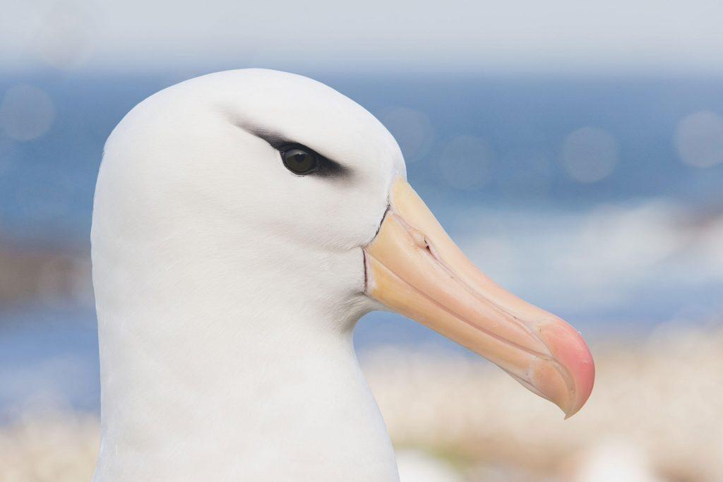 """Contempliamo abissi bianchi: un bianco albatros, figura cristica nel poema di Coleridge """"Rime of an ancient mariner"""""""