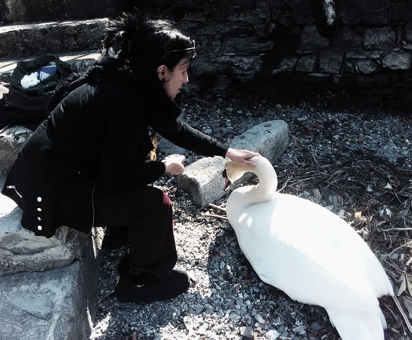 Sandra Azzaroni e cigno, 2018