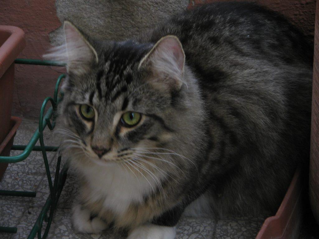 Storia del mio gatto Axl. In questa foto era un cucciolo