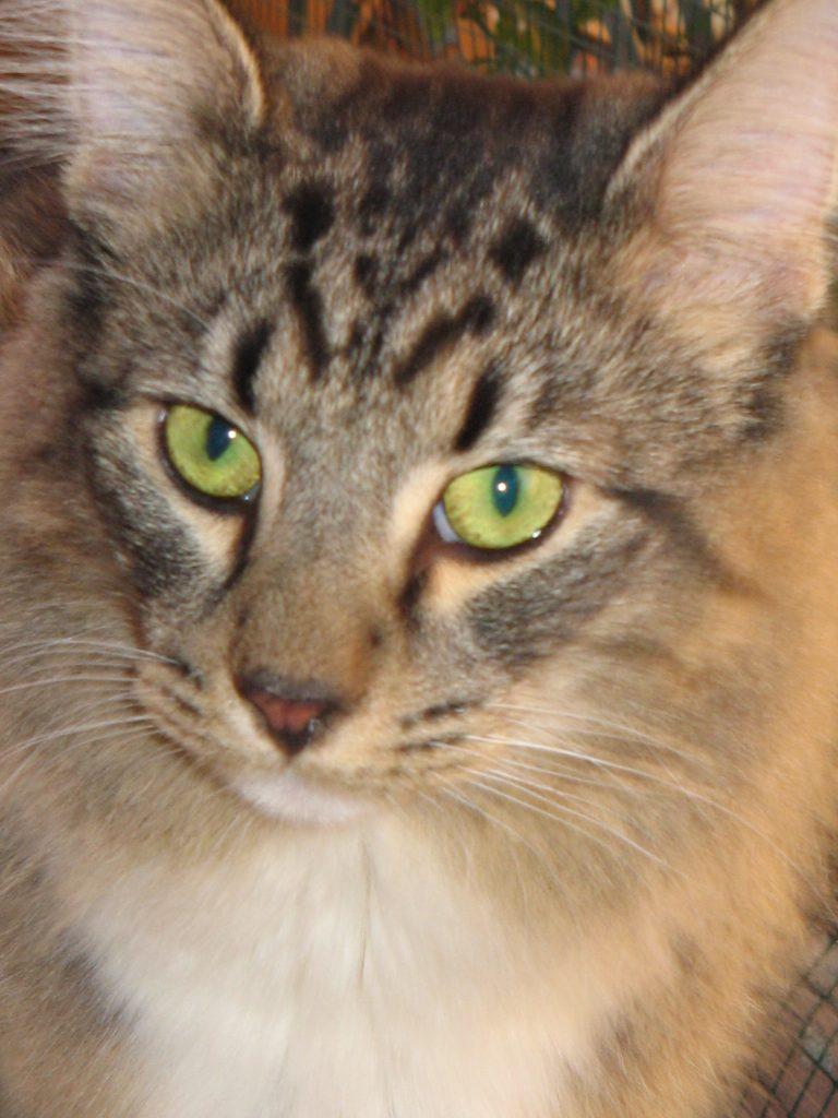Primo piano del mio gatto Axl. Storia della sua vita.