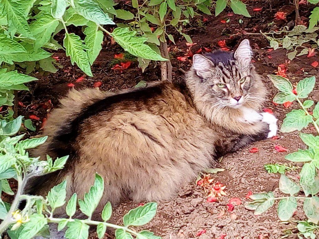 Axl in giardino, storia del mio gatto speciale.