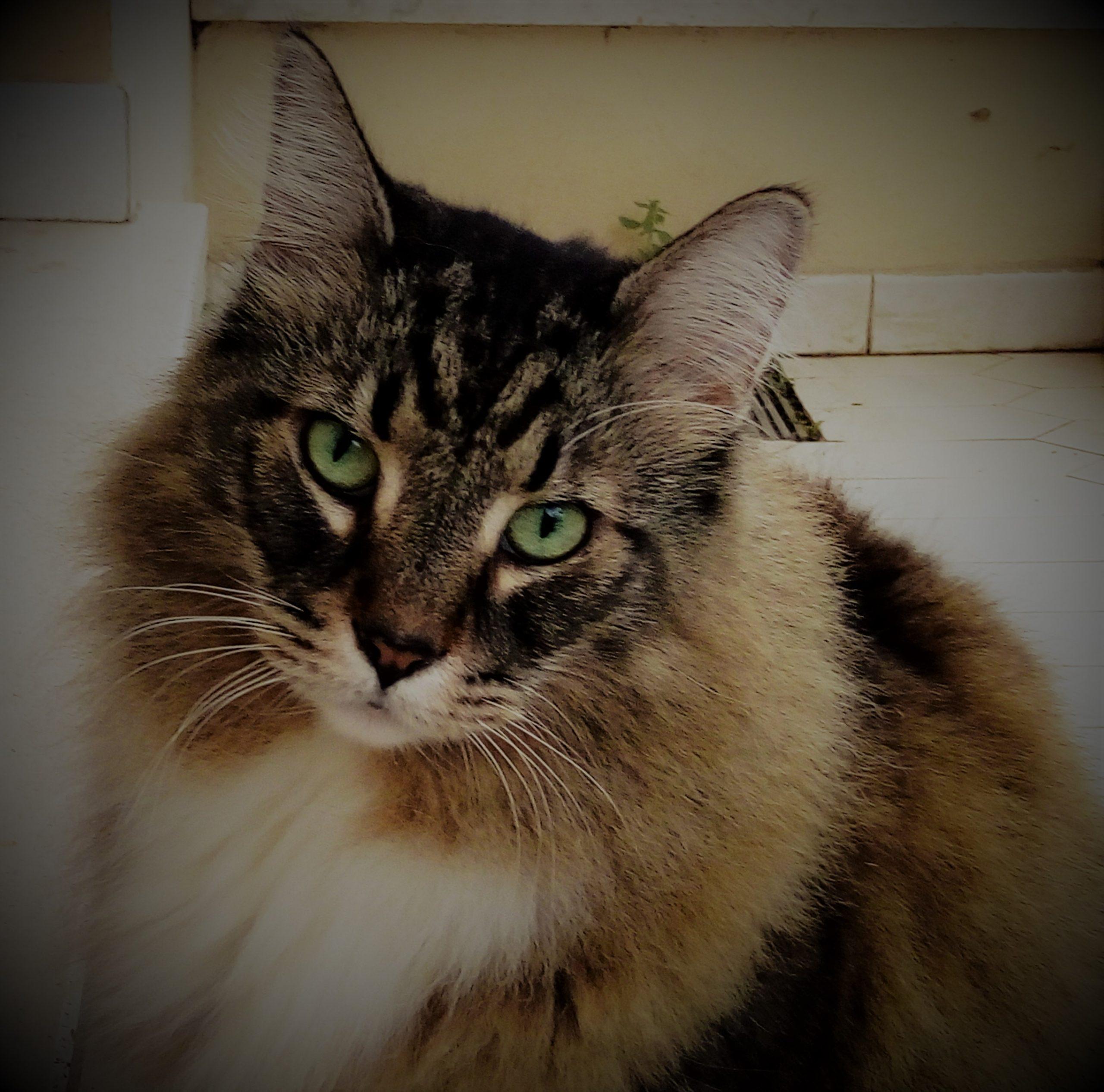 Il mio meraviglioso gatto Axl è morto