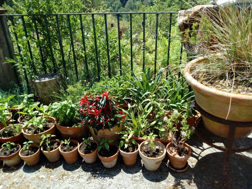 La Tana dei Ghiri: erbe aromatiche