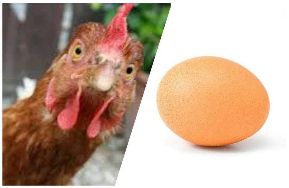 Facebook comunicazione autistica. Prima l'uovo o la gallina?
